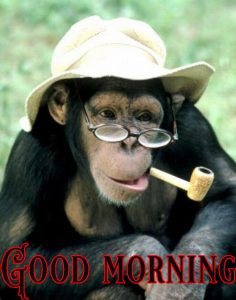 Good Morning Greetings Funny Images Wallpaper photo Pics Download