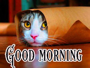 Good Morning Greetings Funny Images Wallpaper Pics Free Download