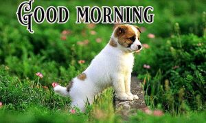 Good Morning Greetings Funny Images Wallpaper Pics HD Download