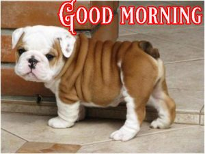 Good Morning Greetings Funny Images Wallpaper Pics HD