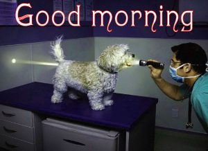 Funny Good Morning Images For Boyfriend Photo Pics HD