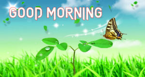 Gud Morning Images wallpaper photo hd