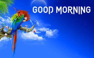 Gud Morning Images photo pictures free download