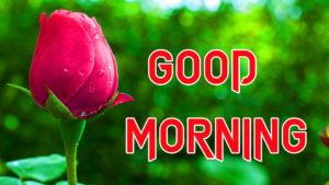 Good Morning Images photo wallpaper free download