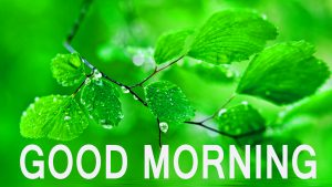 Latest good morning images Wallpaper Pictures Free Download