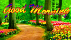 Nature Good Morning Wishes Images pictures photo hd download