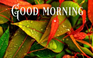 Suprabhat Good Morning Images Pictures Photo Pics HD Download