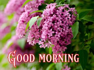 Suprabhat Good Morning Images Pictures Photo Pics Download
