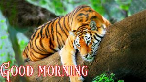 Suprabhat Good Morning Images Pictures Photo Pics Free Download