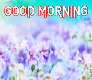 Special Good Morning Images wallpaper pictures photo hd download