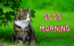 Special Good Morning Images photo pictures free hd download