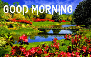 Spring Good Morning Images photo wallpaper download