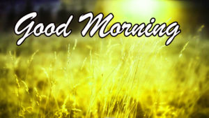 Sunshine Good Morning Images pictures photo hd download