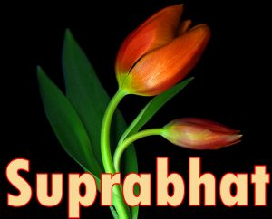 Latest HD suprabhat images with flowers Images Wallpaper Photo Download