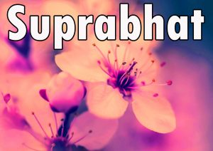 Latest HD suprabhat images with flowers Images Photo Pictures HD For Facebook