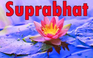 Latest HD suprabhat images with flowers Images Photo Pictures Free HD