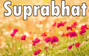 Latest HD suprabhat images with flowers Images Photo Pictures Free Download