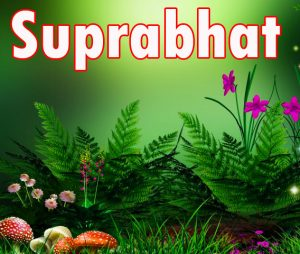 Latest HD suprabhat images with flowers Images Photo Pictures Download For Facebook