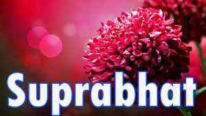 Latest HD suprabhat images with flowers Images Photo Pictures HD