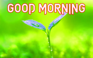 Very Sweet Good Morning Images photo hd