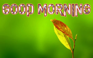 Very Sweet Good Morning Images pictures photo free hd