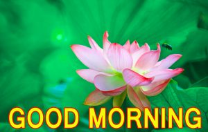 Best All Good Morning Images Wallpaper Free Download