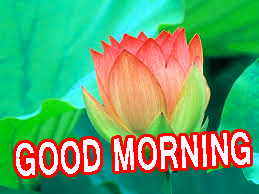 Best All Good Morning Images Pictures Photo HD