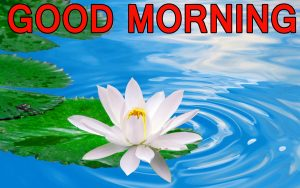 Best All Good Morning Images Pictures Pics Free HD