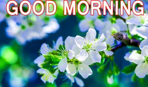Best All Good Morning Images Pictures Pics HD For Whatsapp