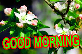 Best All Good Morning Images Pictures Pics Download For Facebook