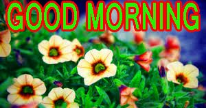 Best All Good Morning Images Pictures Pics Free HD Download