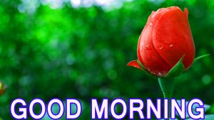 Best All Good Morning Images Pictures Pics Photo Download