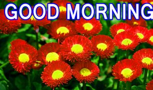 Best All Good Morning Images Wallpaper Pictures Free Download