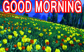 Best All Good Morning Images Pictures Pics HD Download