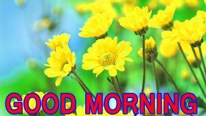 Best All Good Morning Images Pictures Pics Photo HD Download