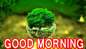 Best All Good Morning Images Pictures Pics Photo HD