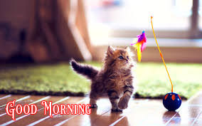 Cute Good Morning Images Wallpaper Photo Pics Download for Him & Her