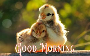 Cute Good Morning Images Wallpaper Pictures Pics Free Download
