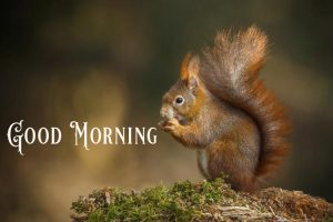 Cute Good Morning Images Wallpaper Pictures Photo HD