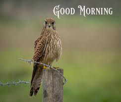 Cute Good Morning Images Photo Wallpaper Free Download