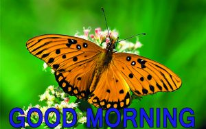 Good Morning Friends Images Wallpaper Pictures Pics HD