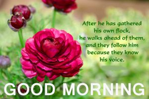 Good Morning Beautiful Quotes Images Pictures Pics Free Download