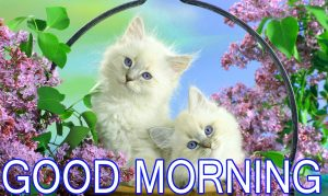 Sister Good Morning Images Photo Wallpaper Download