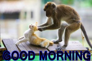 Funny Good Morning Images Photo Wallpaper Pictures Free HD