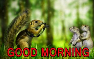 Funny Good Morning Images Photo Wallpaper Download HD