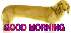 Funny Good Morning Images Wallpaper Pictures Photo HD