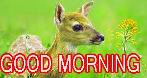 Funny Good Morning Images Pictures Photo Download
