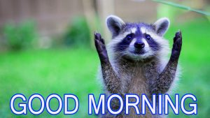 Funny Good Morning Images Photo Pictures Free Download