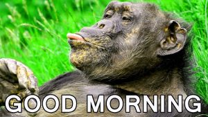 Funny Good Morning Images Wallpaper Pics Pictures HD