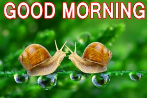 Funny Good Morning Images Wallpaper Pics Pictures Download